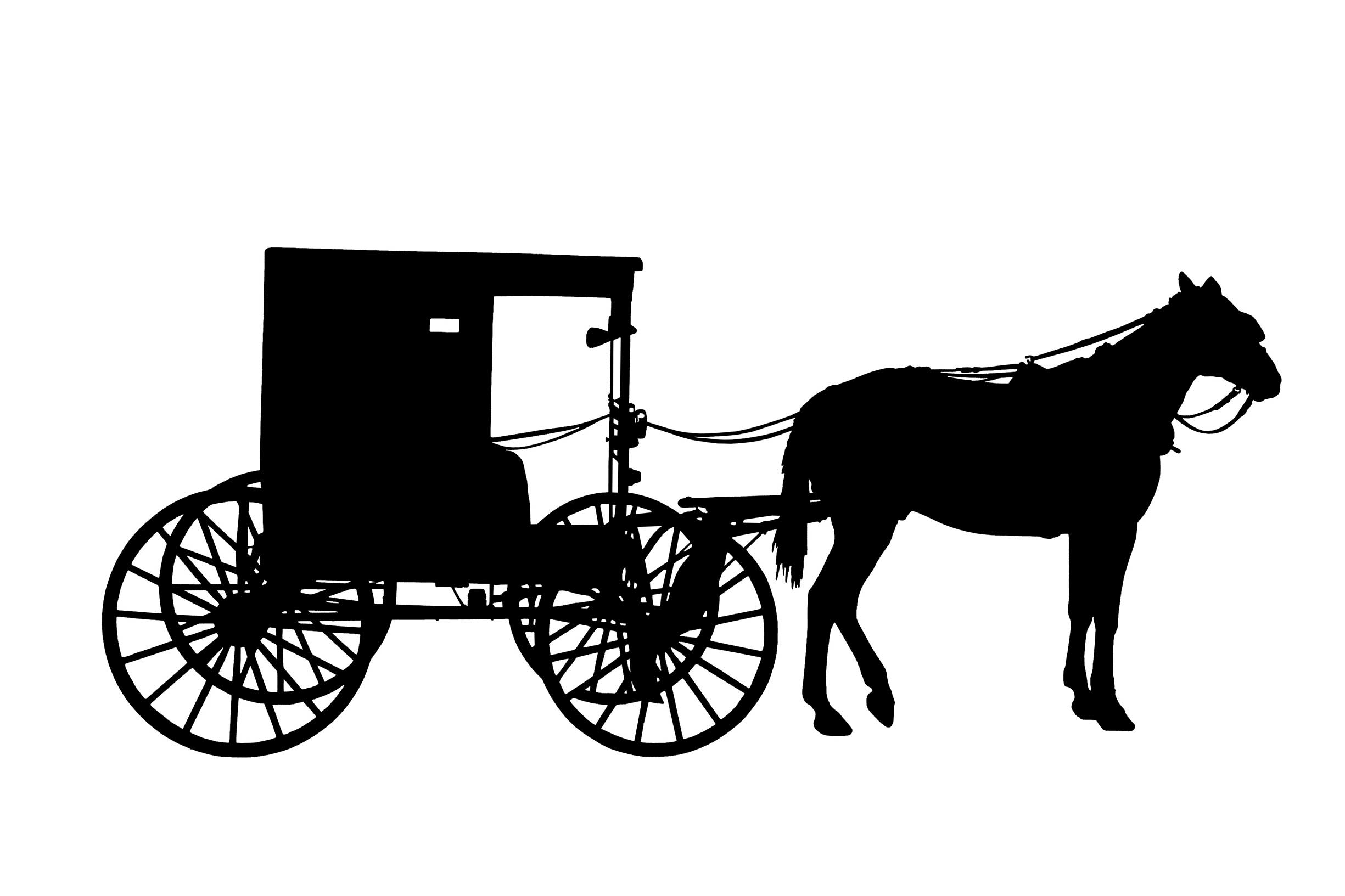 Buggy Wash & Harness Cleaner